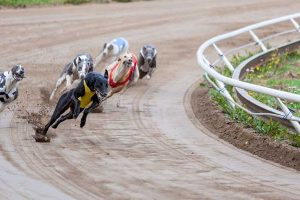 Seabrook Greyhound Park